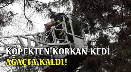 KÖPEKTEN KORKAN KEDİ AĞAÇTA KALDI!