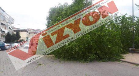 Kısa fırtına ağaçlar kırıldı
