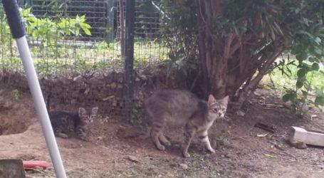 Yavru Kedi 3 saat sonra kurtarıldı