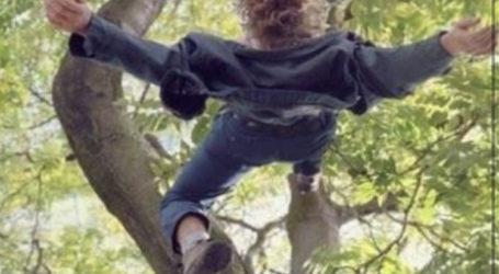 Ağaçtan Düştü Kurtarılamadı