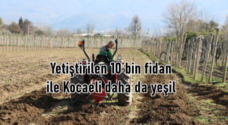 Yetiştirilen 10 bin fidan ile Kocaeli daha da yeşil