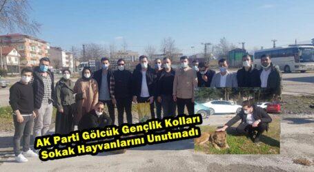 AK Parti Gölcük Gençlik Kolları Sokak Hayvanlarını Unutmadı
