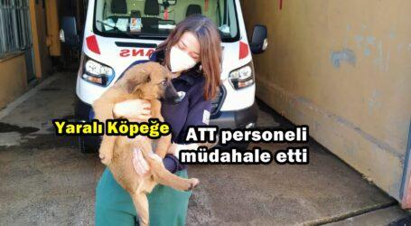 Yaralı Köpeğe ATT personeli müdahale etti